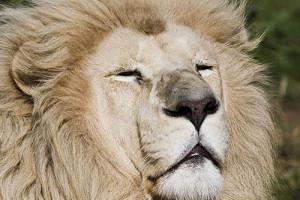 Lion_Park_2